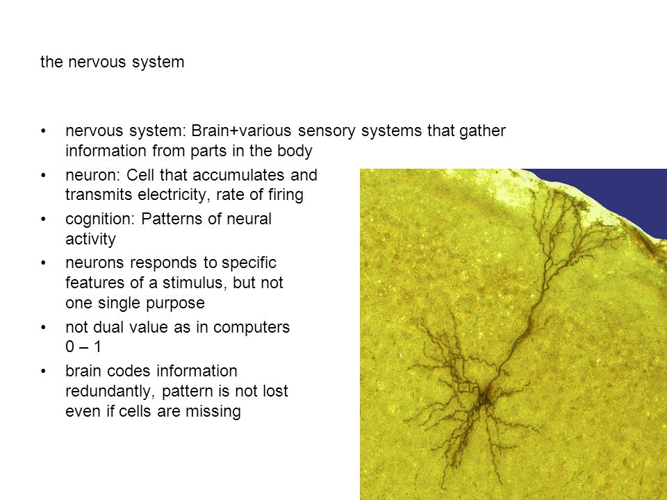 the nervous system nervous system: Brain+various sensory systems that gather information from parts in the body.