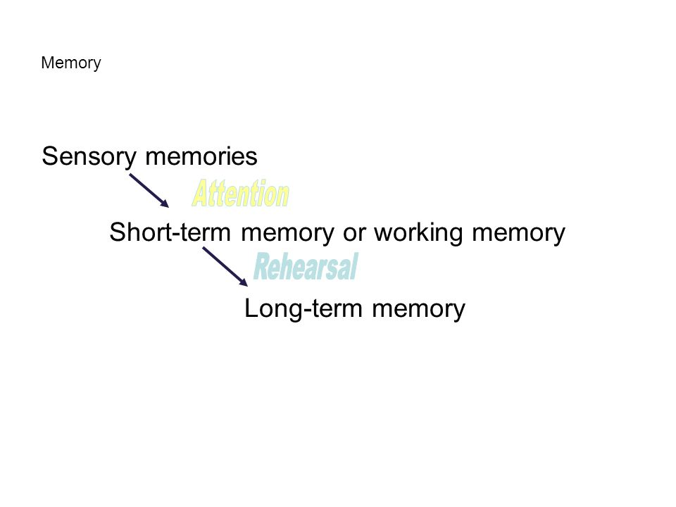 Short-term memory or working memory Long-term memory
