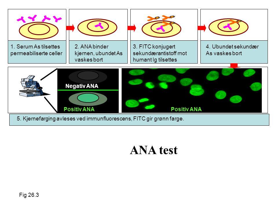ANA test 1. Serum As tilsettes permeabiliserte celler