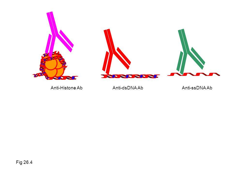 Anti-dsDNA Ab Anti-ssDNA Ab Anti-Histone Ab Fig 26.4