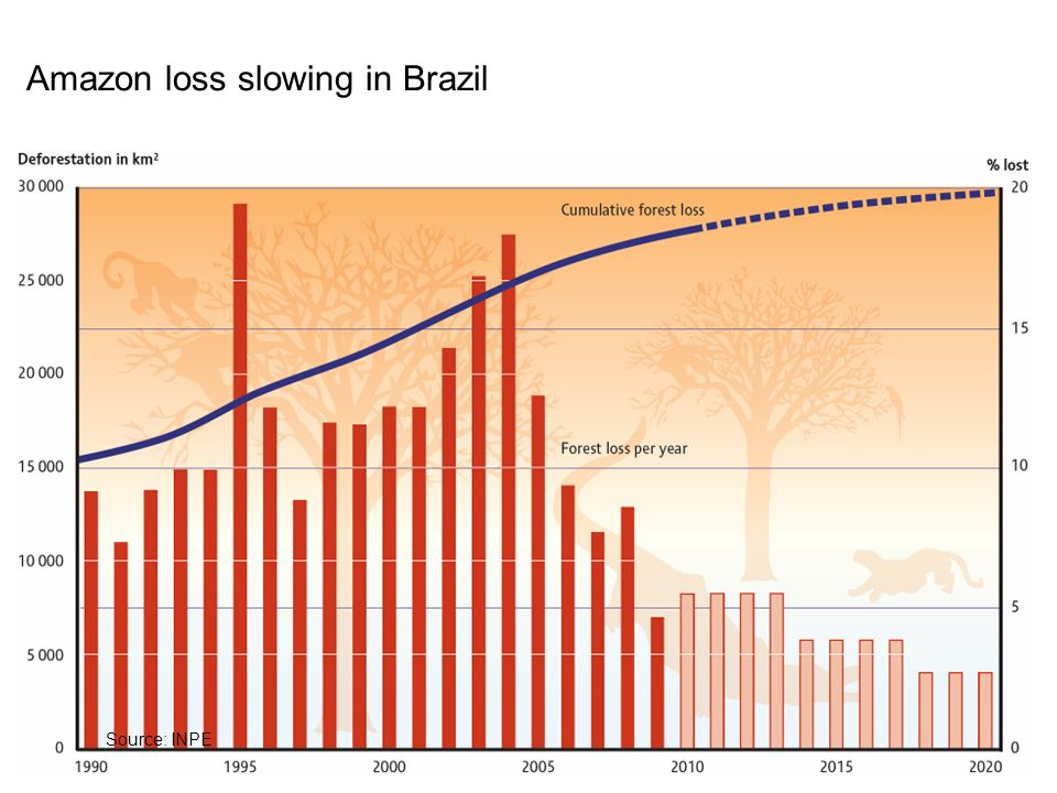 Amazon loss slowing in Brazil