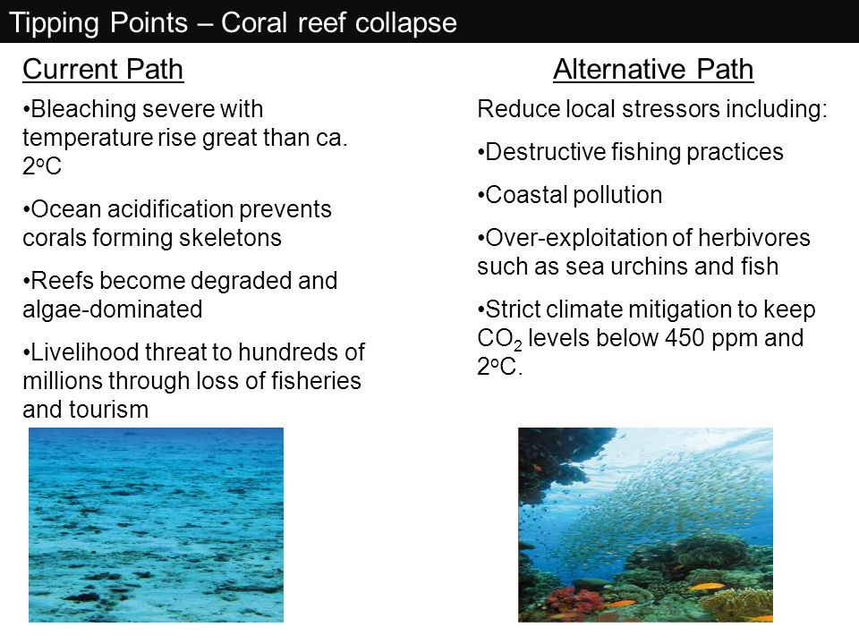 Tipping Points – Coral reef collapse