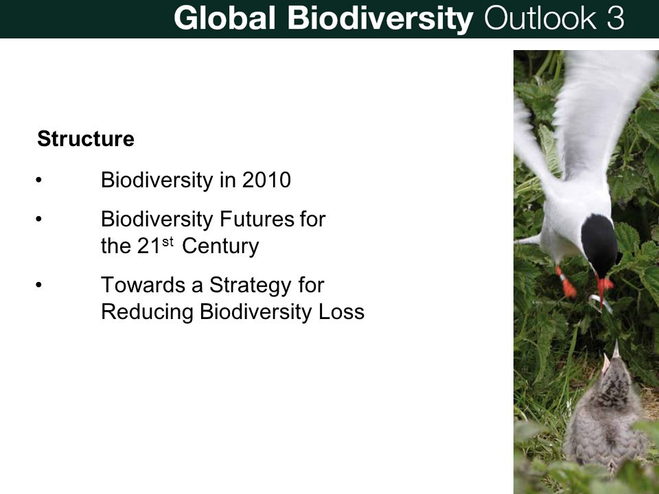 Biodiversity Futures for the 21st Century