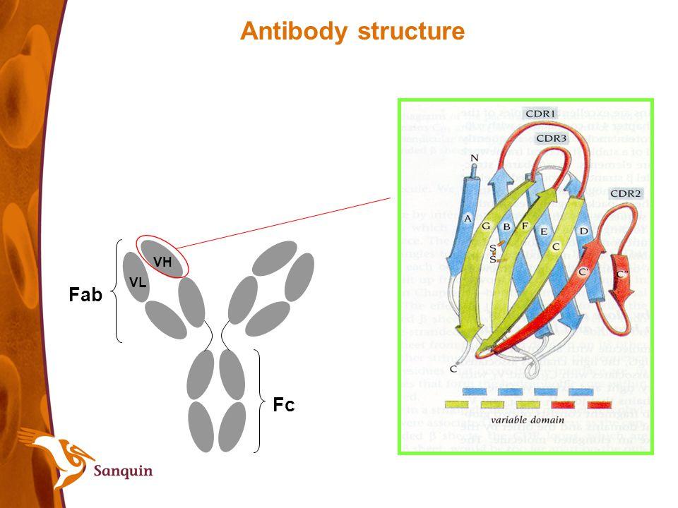 Antibody structure Fab Fc VH VL