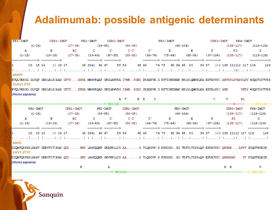 Adalimumab: possible antigenic determinants