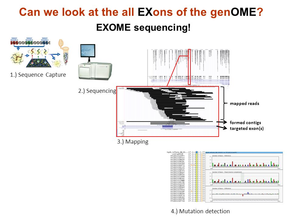Can we look at the all EXons of the genOME