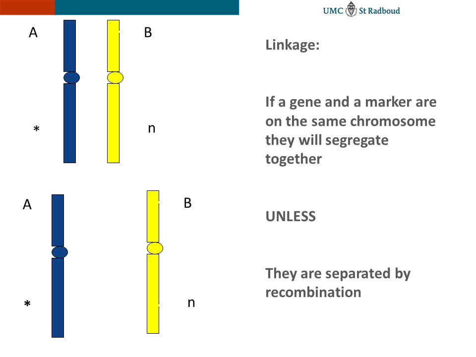 A B. Linkage: If a gene and a marker are on the same chromosome they will segregate together. UNLESS.