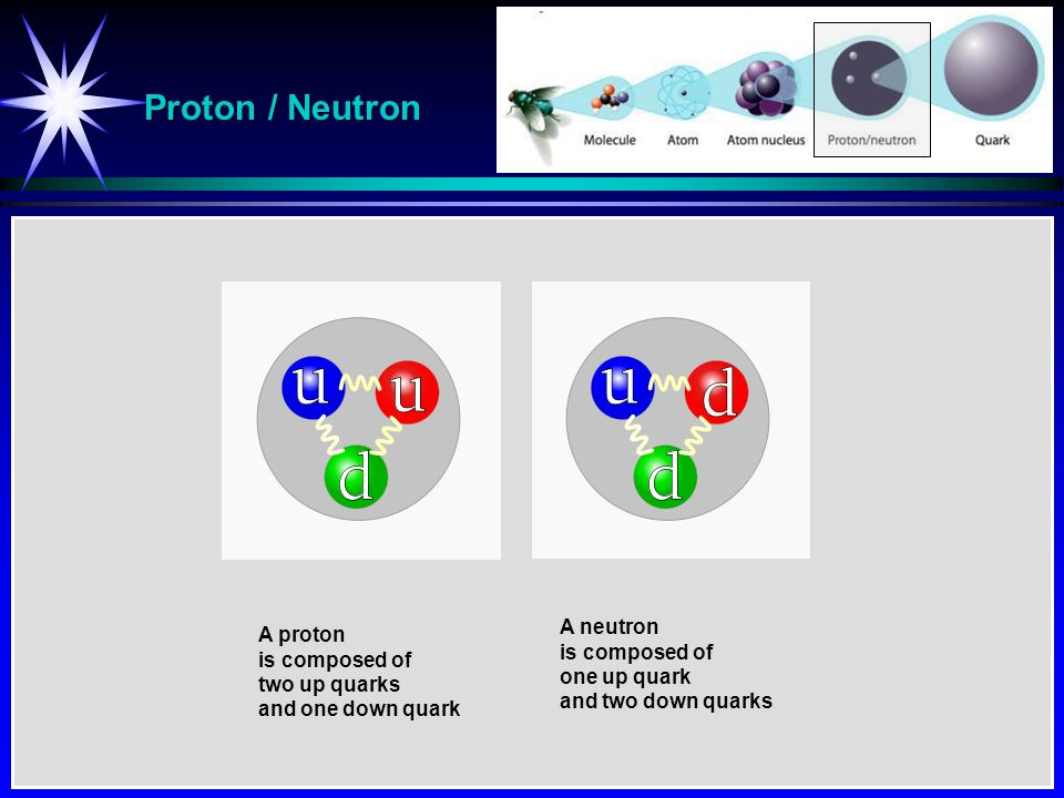 Proton / Neutron A neutron A proton is composed of is composed of
