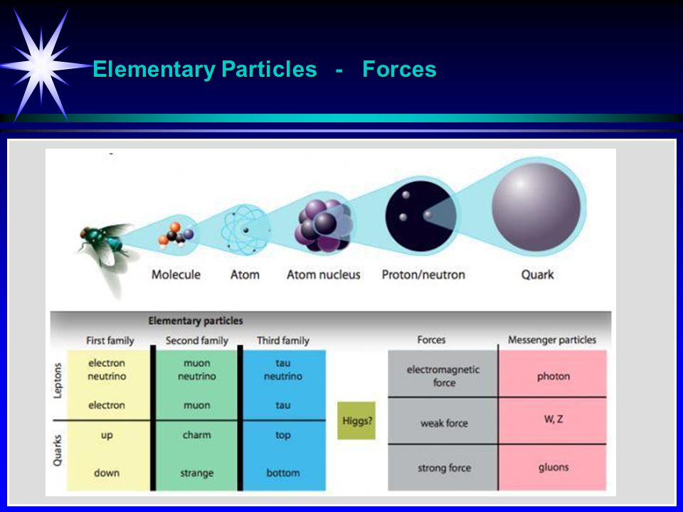 Elementary Particles - Forces