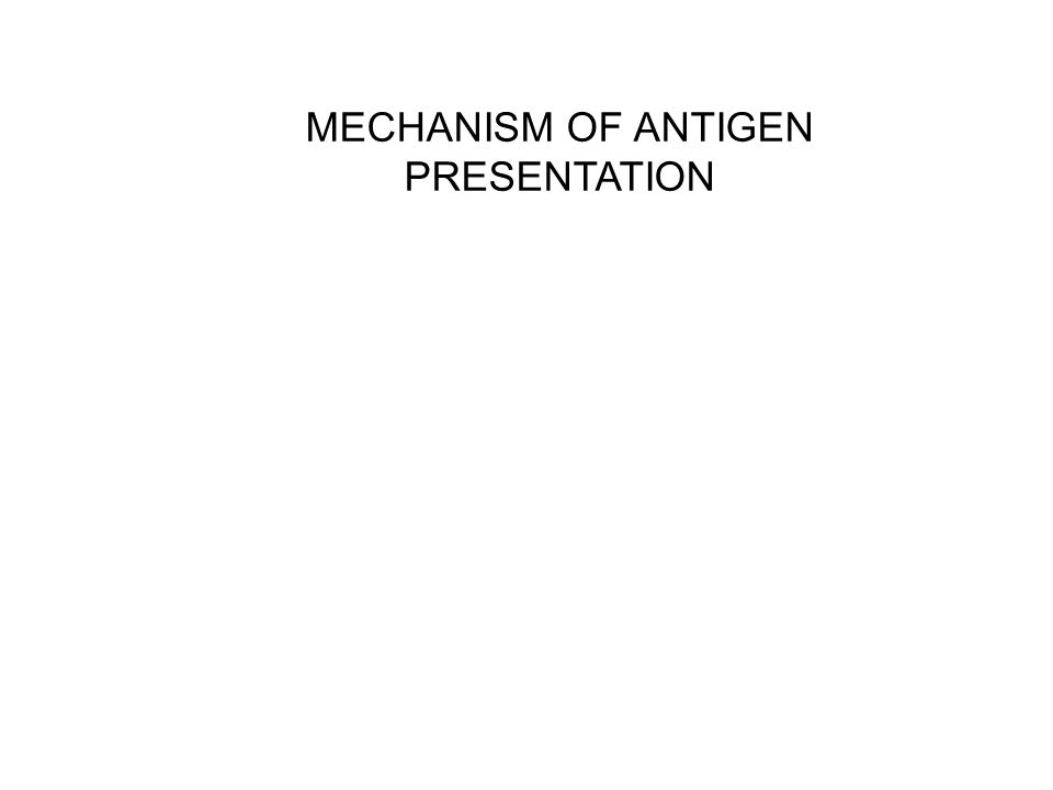 MECHANISM OF ANTIGEN PRESENTATION