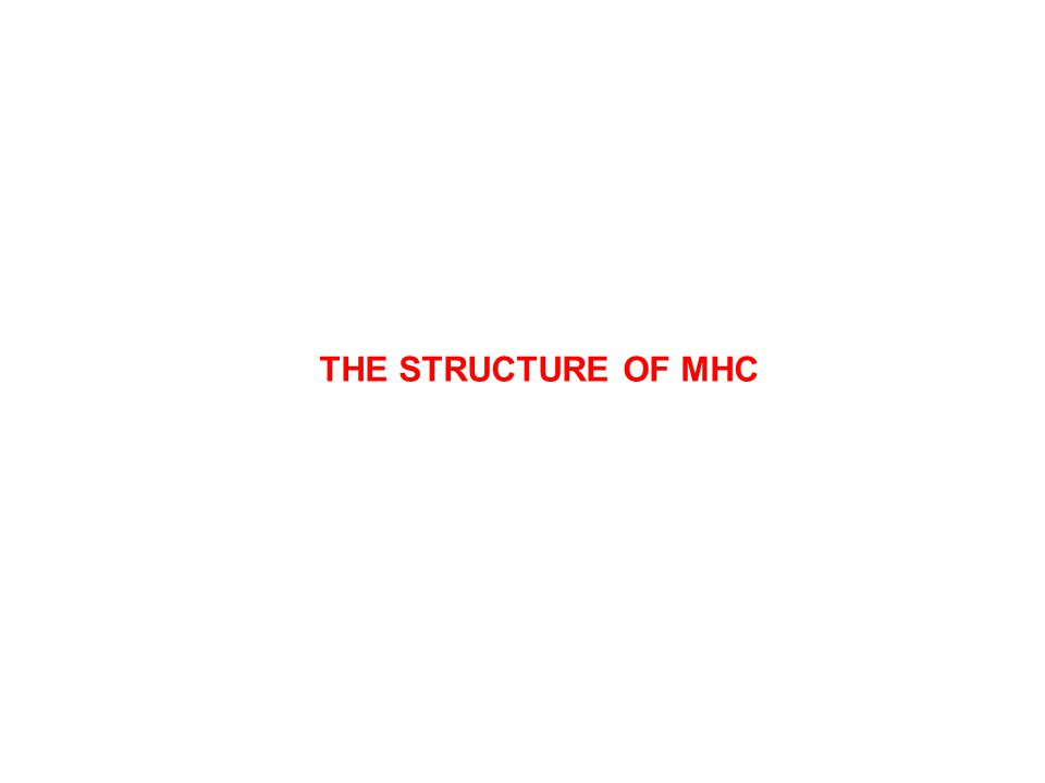 THE STRUCTURE OF MHC