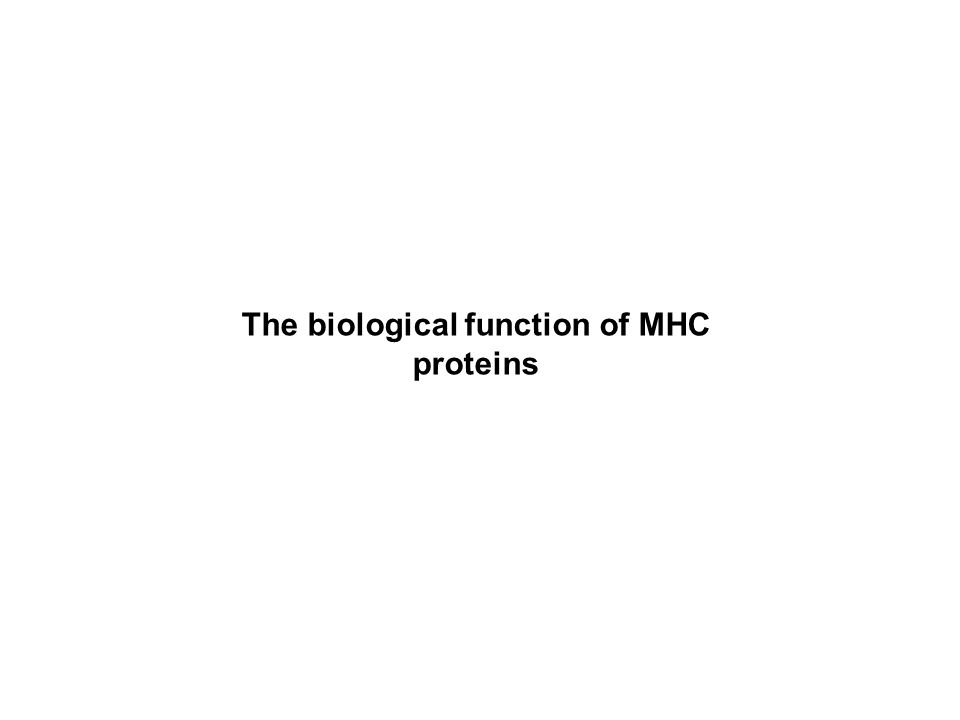The biological function of MHC proteins