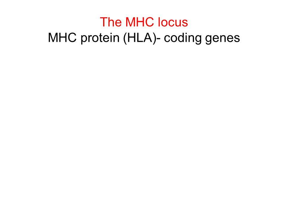 MHC protein (HLA)- coding genes