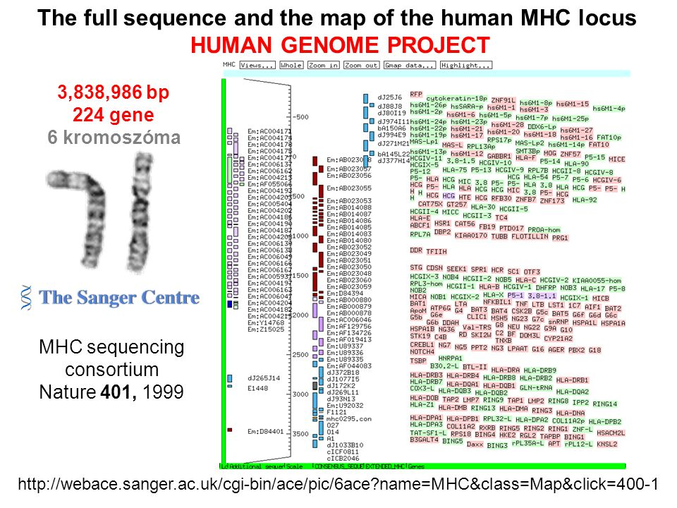 The full sequence and the map of the human MHC locus