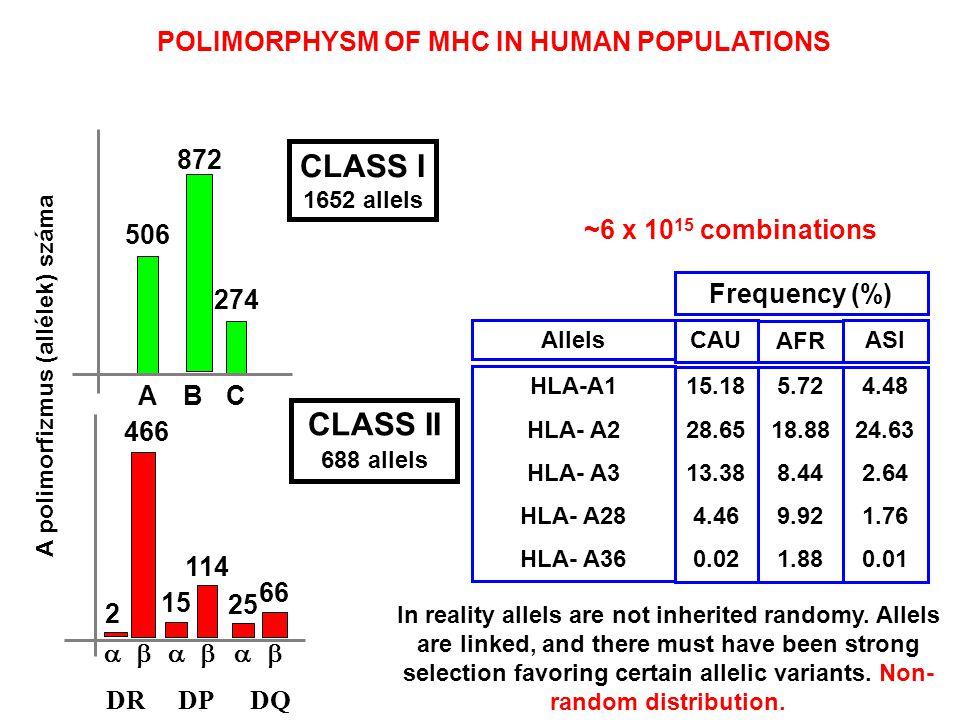 A polimorfizmus (allélek) száma