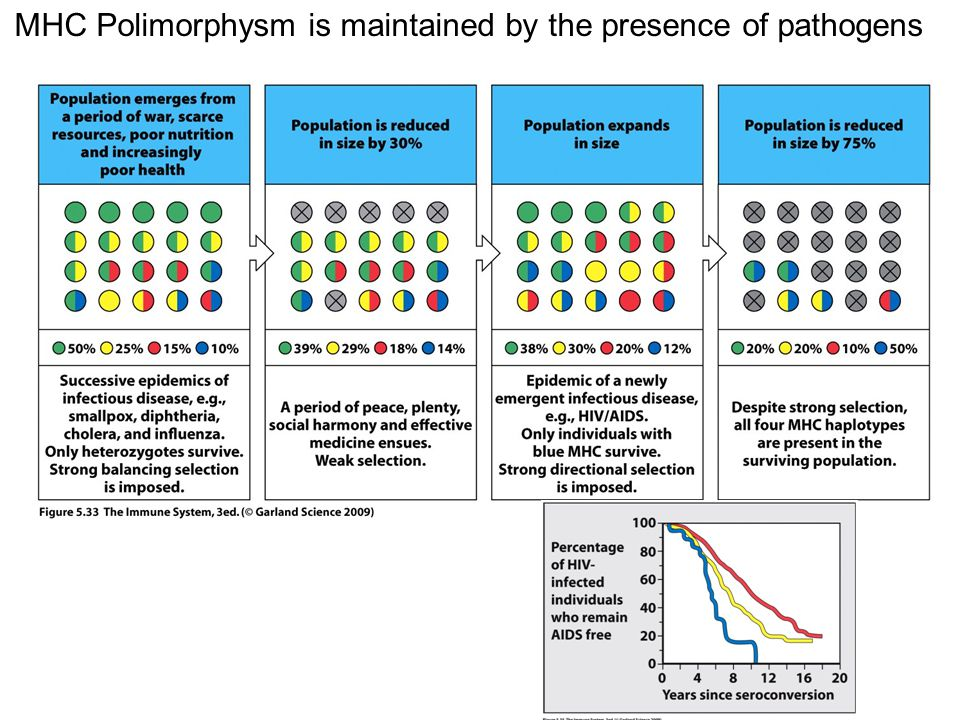 MHC Polimorphysm is maintained by the presence of pathogens