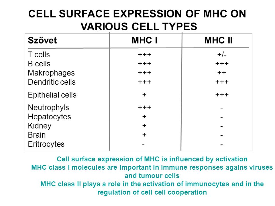 CELL SURFACE EXPRESSION OF MHC ON VARIOUS CELL TYPES