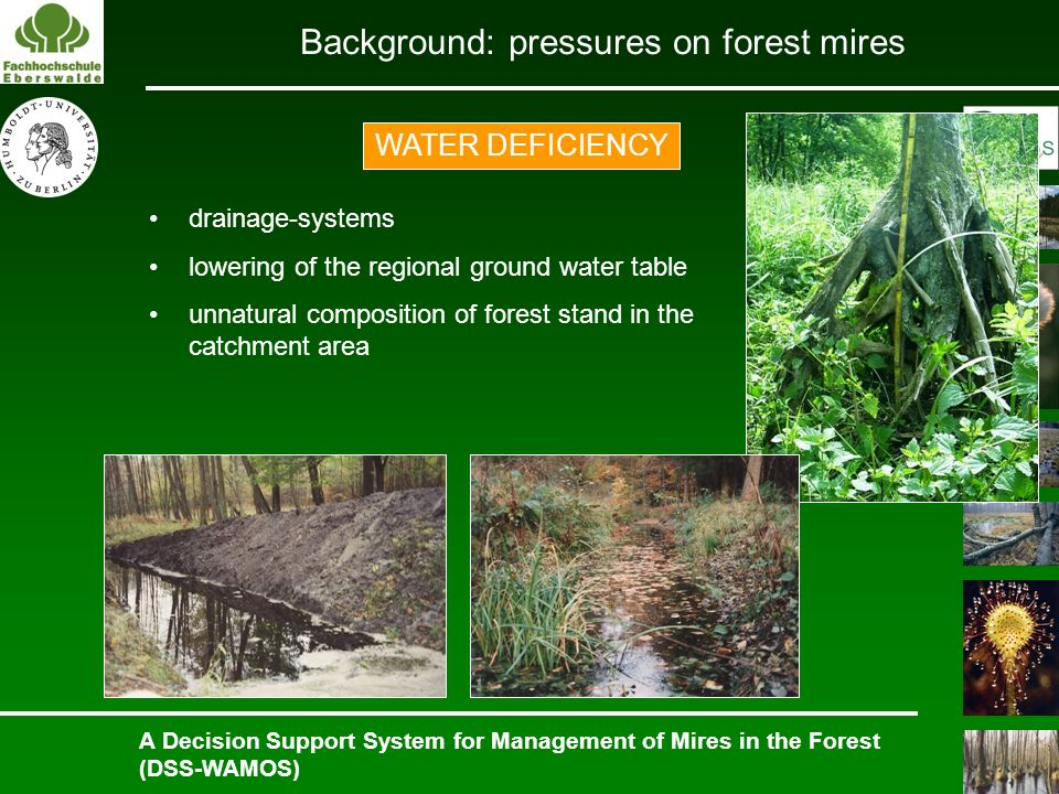 Background: pressures on forest mires