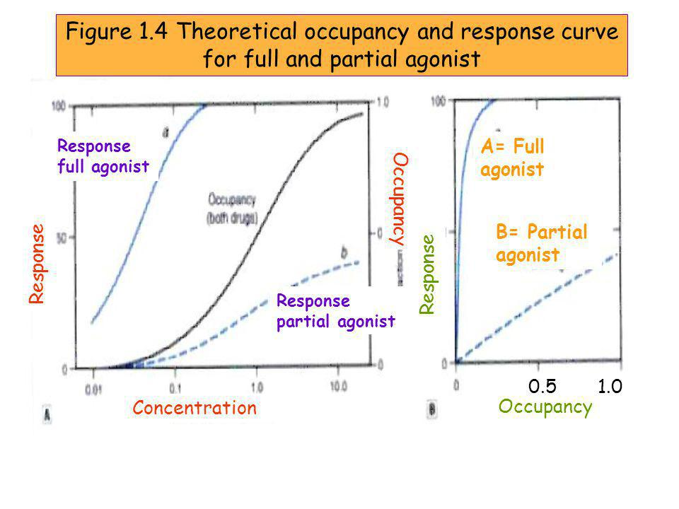 Figure 1.4 Theoretical occupancy and response curve for full and partial agonist