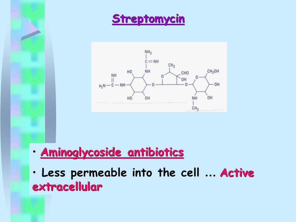 Streptomycin Aminoglycoside antibiotics Less permeable into the cell … Active extracellular