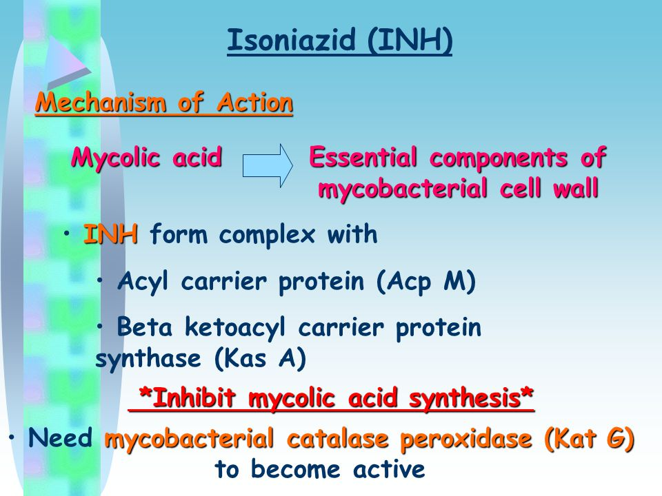 Isoniazid (INH) Mechanism of Action Mycolic acid