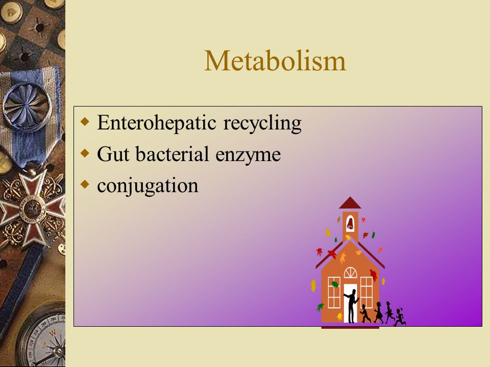 Metabolism Enterohepatic recycling Gut bacterial enzyme conjugation