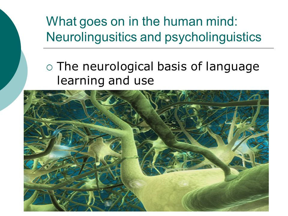 What goes on in the human mind: Neurolingusitics and psycholinguistics