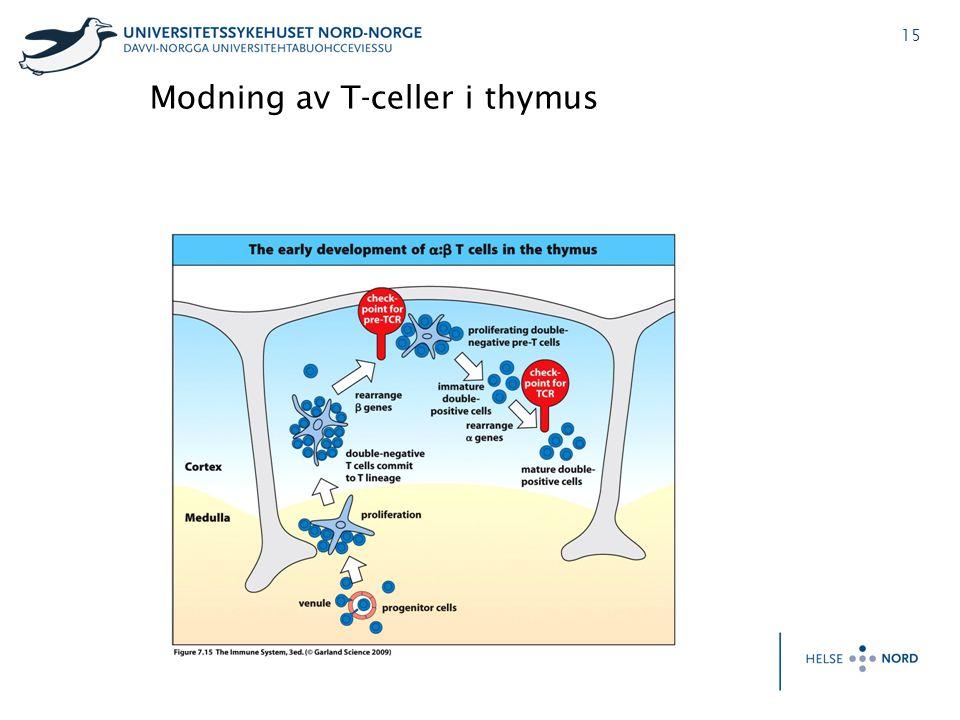 Modning av T-celler i thymus