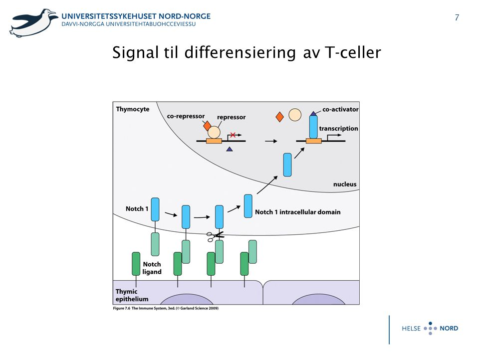 Signal til differensiering av T-celler