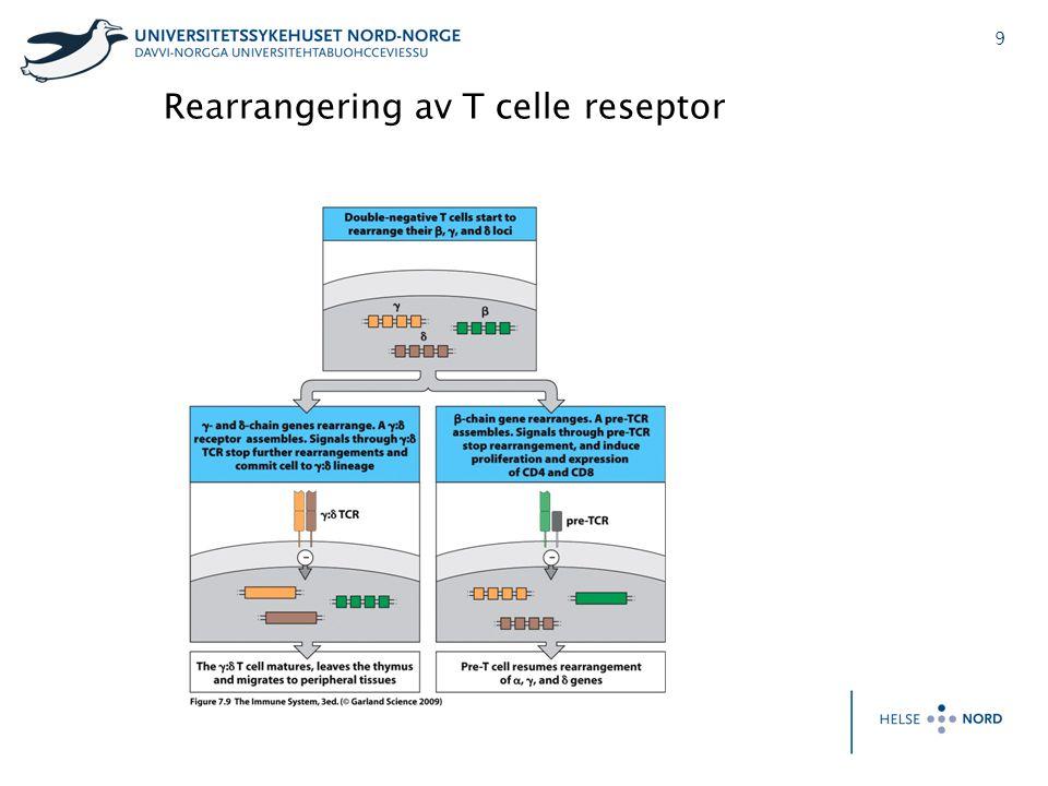 Rearrangering av T celle reseptor