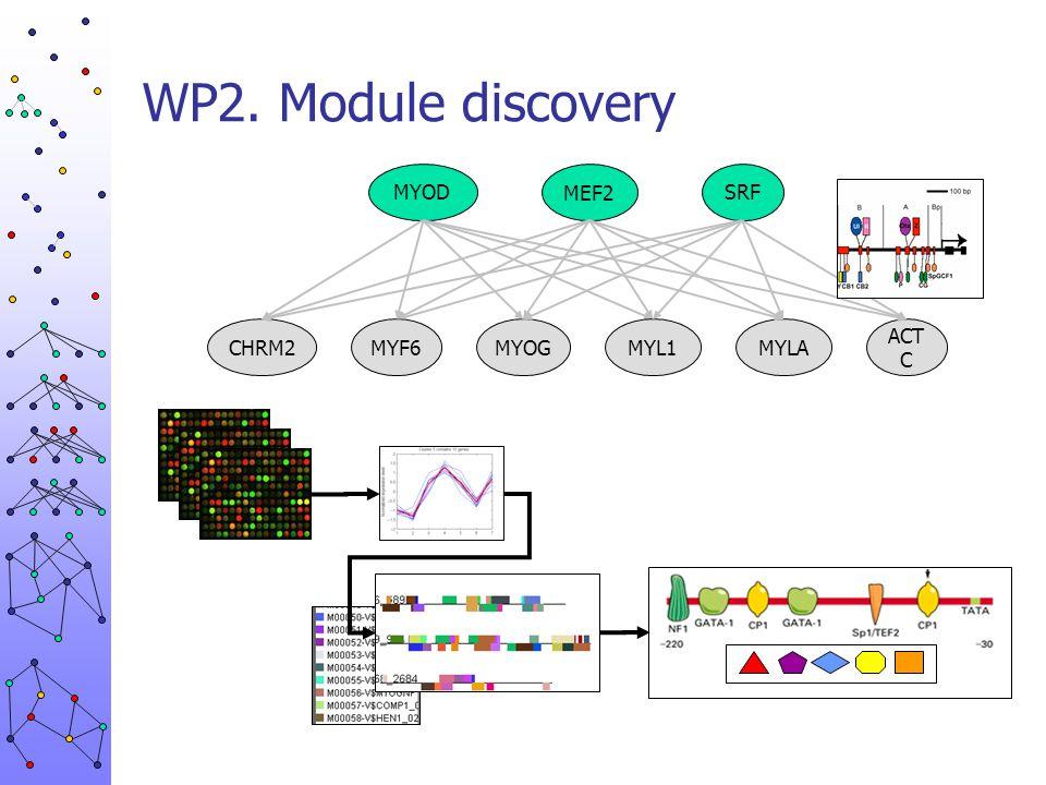WP2. Module discovery MYOD MEF2 SRF CHRM2 MYF6 MYOG MYL1 MYLA ACTC
