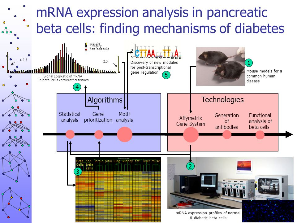 mRNA expression analysis in pancreatic beta cells: finding mechanisms of diabetes