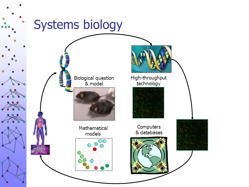 Systems biology Biological question & model High-throughput technology