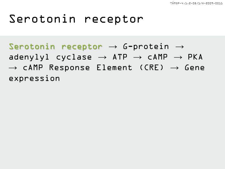 Serotonin receptor Serotonin receptor → G-protein → adenylyl cyclase → ATP → cAMP → PKA → cAMP Response Element (CRE) → Gene expression.