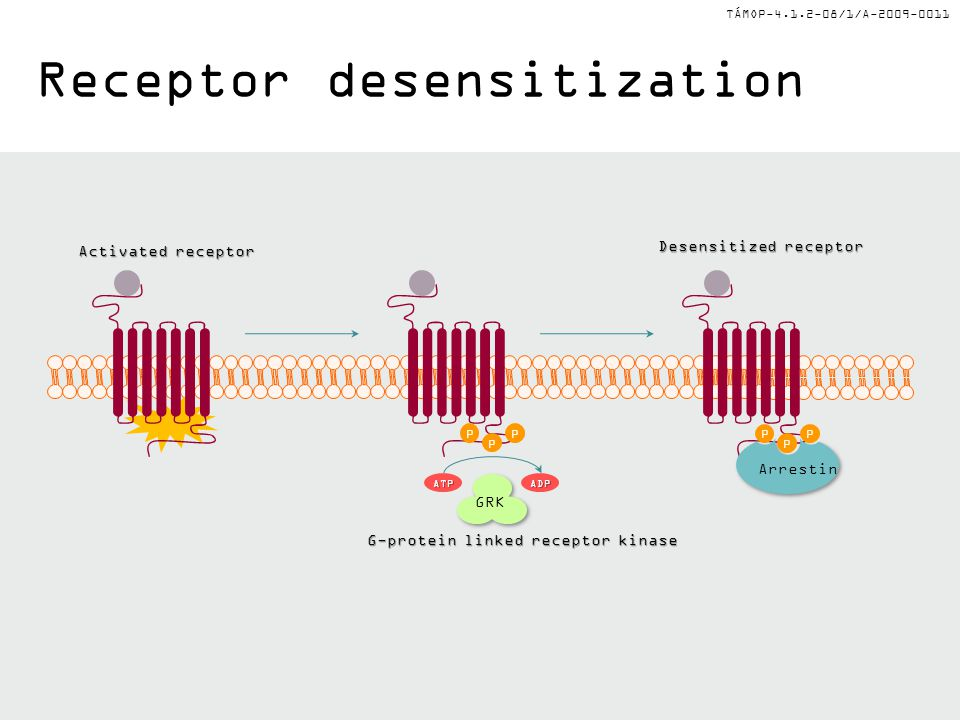 Receptor desensitization