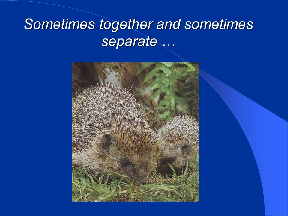 Sometimes together and sometimes separate …