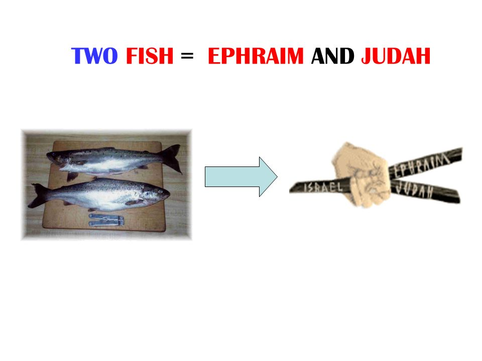 TWO FISH = EPHRAIM AND JUDAH