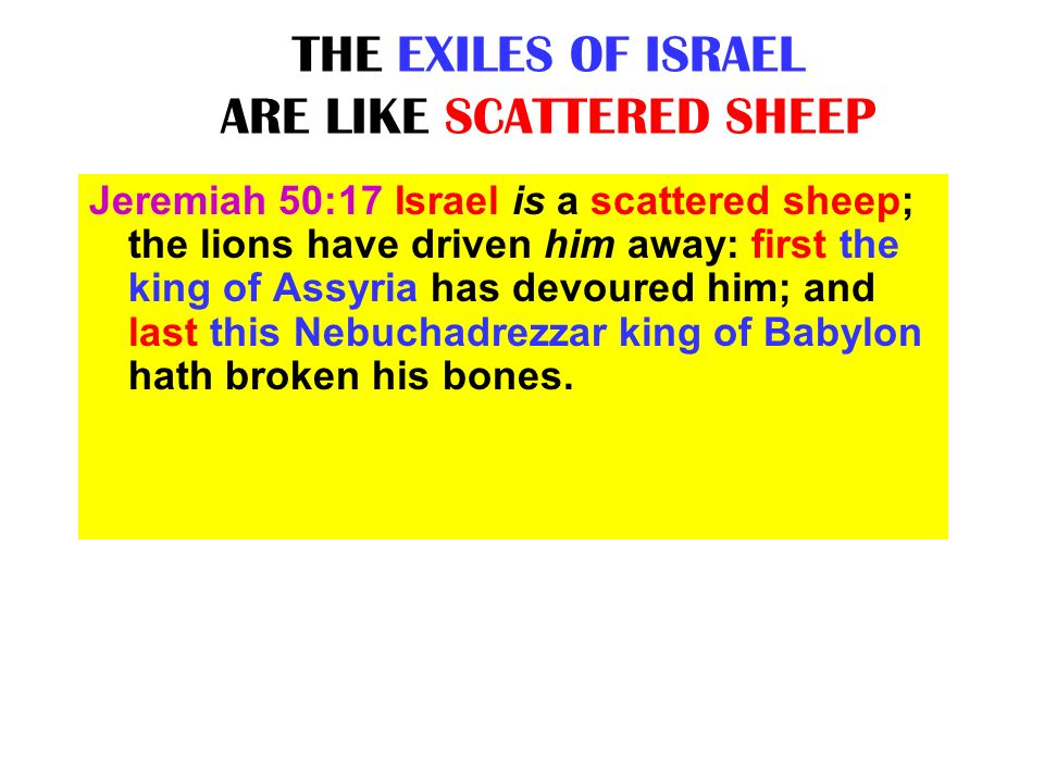 THE EXILES OF ISRAEL ARE LIKE SCATTERED SHEEP
