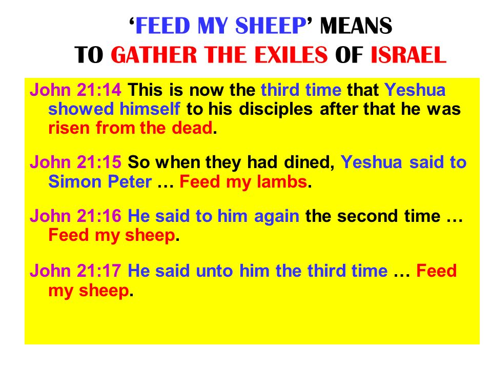 'FEED MY SHEEP' MEANS TO GATHER THE EXILES OF ISRAEL