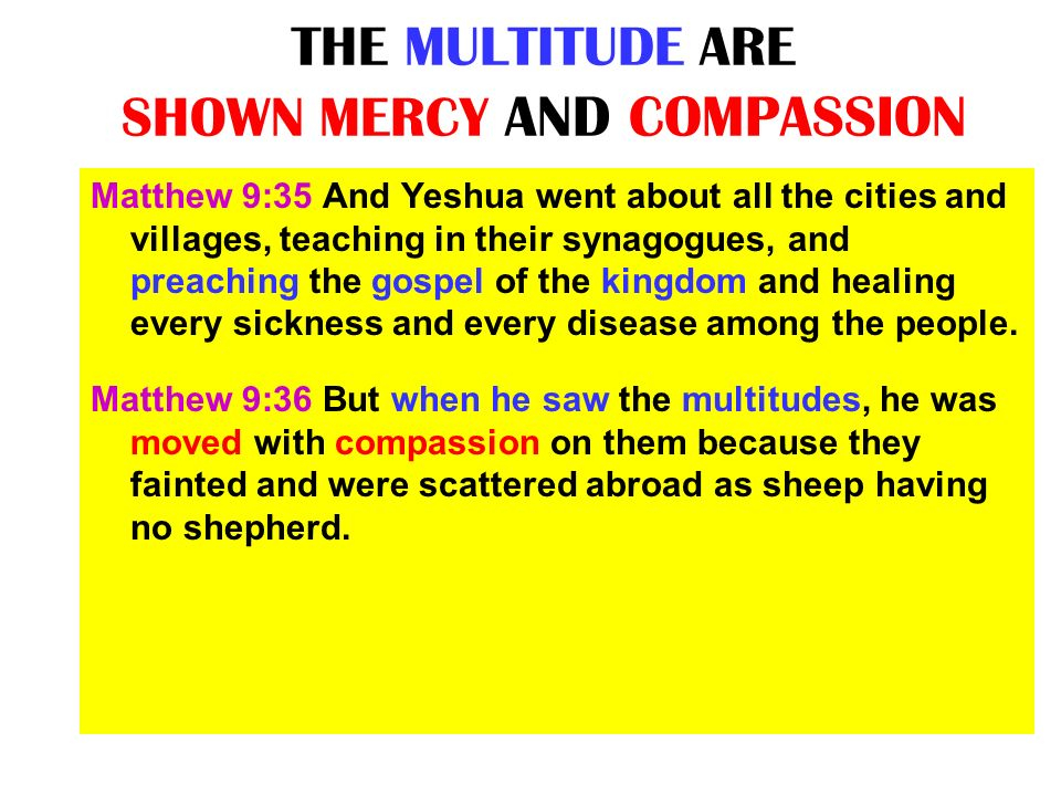 THE MULTITUDE ARE SHOWN MERCY AND COMPASSION