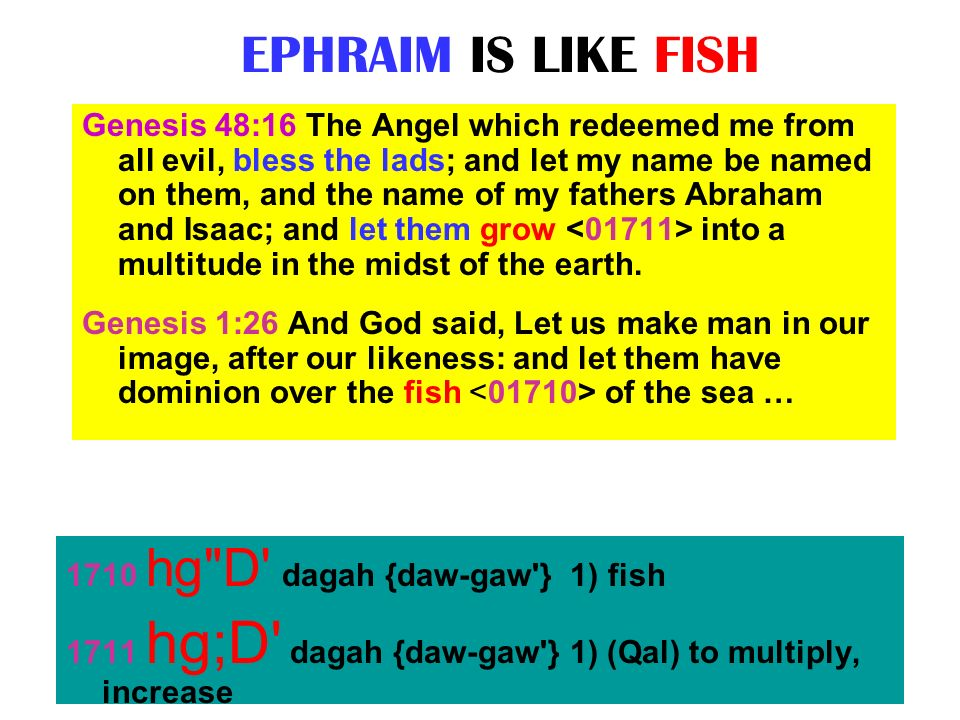 EPHRAIM IS LIKE FISH