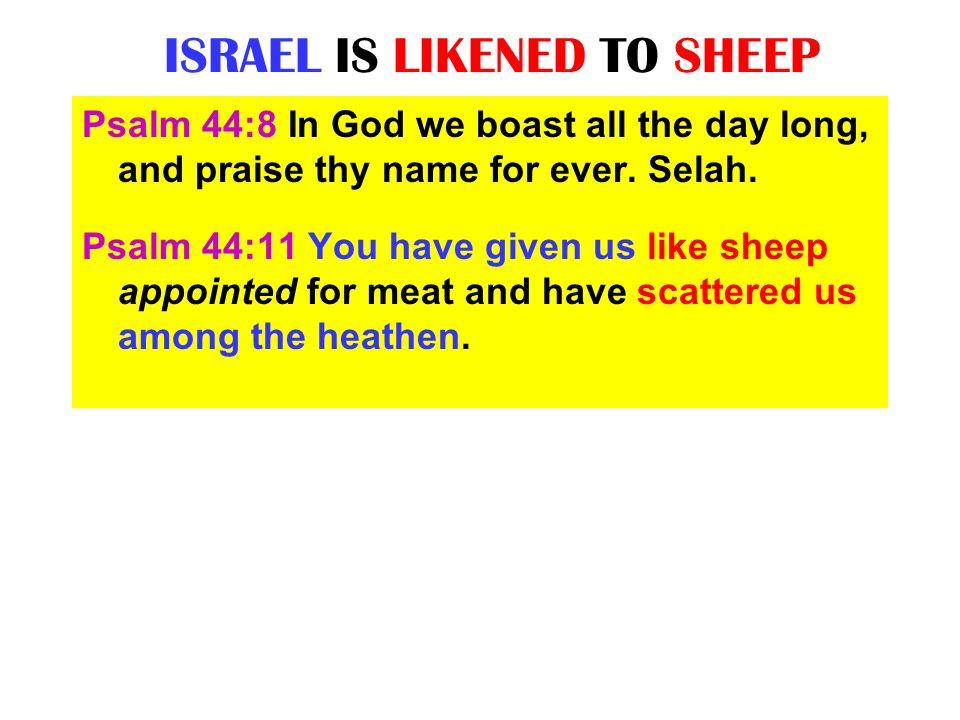 ISRAEL IS LIKENED TO SHEEP