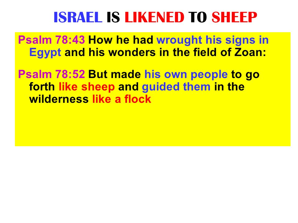 ISRAEL IS LIKENED TO SHEEP
