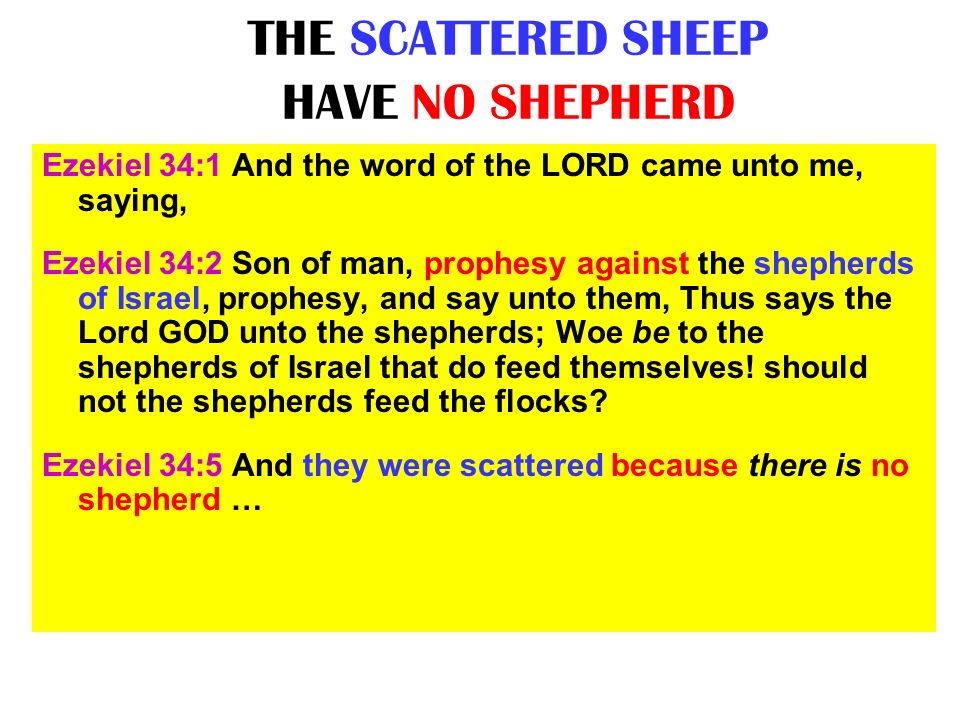 THE SCATTERED SHEEP HAVE NO SHEPHERD