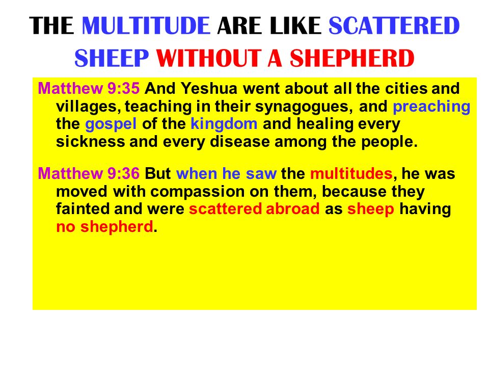 THE MULTITUDE ARE LIKE SCATTERED SHEEP WITHOUT A SHEPHERD
