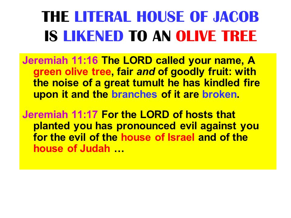 THE LITERAL HOUSE OF JACOB IS LIKENED TO AN OLIVE TREE