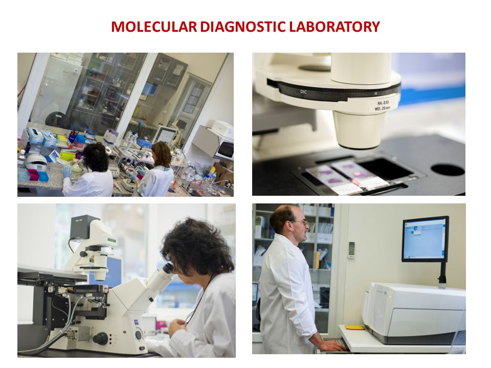 MOLECULAR DIAGNOSTIC LABORATORY