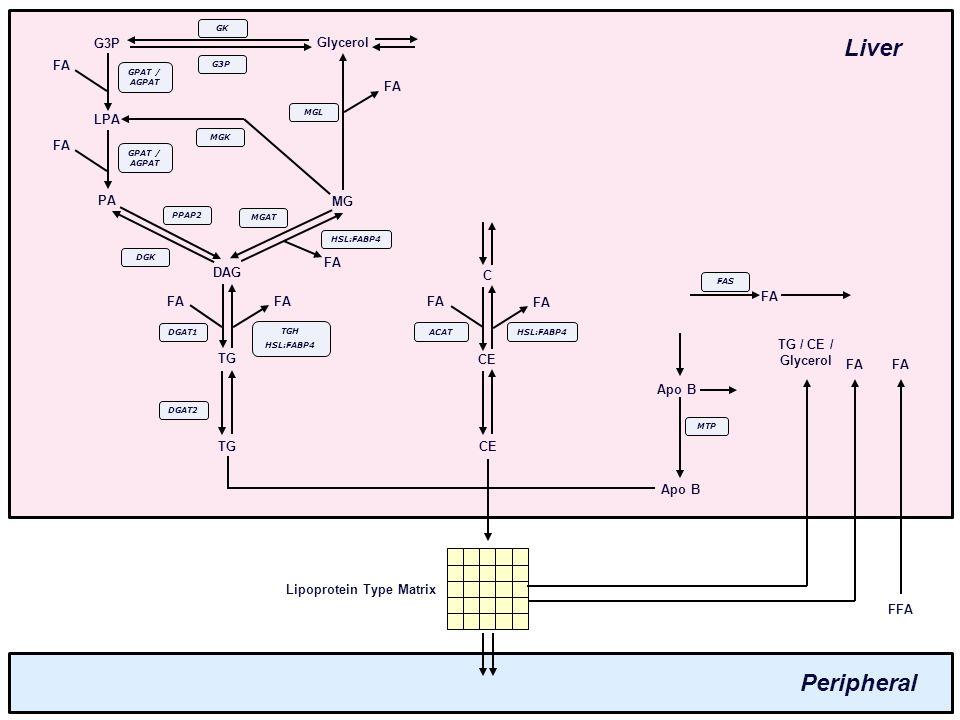 Different lipoprotein types