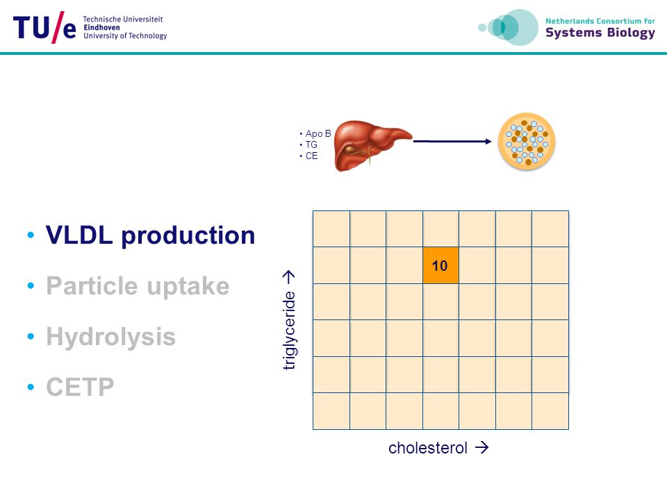 VLDL production Particle uptake Hydrolysis CETP triglyceride 