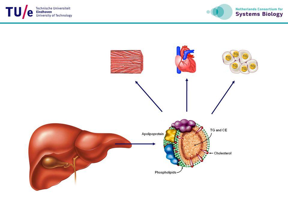 FFA triglyceride cholesterol ester HDL LDL IDL VLDL chylomicron